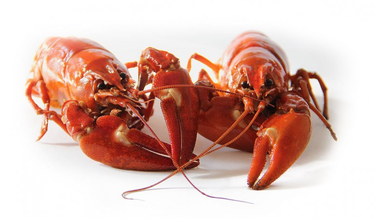 crayfish-sweden-crayfish-party-red-52959