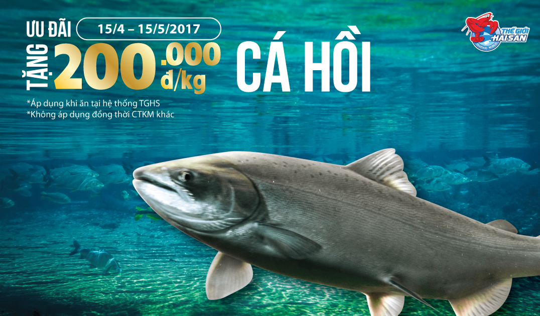 CaHoi-web-2017