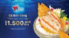 Ưu đãi cá bơn vàng - Thế giới hải sản
