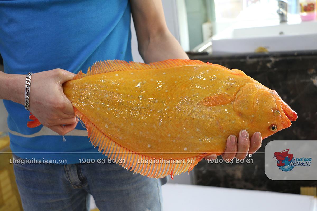 Cá bơn vàng tươi ngon ở Thế giới hải sản